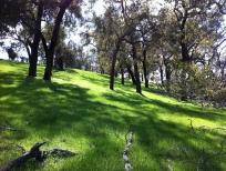 hill-medium