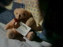 teddy-medium