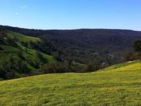 valley-view-medium
